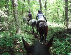林の中の乗馬